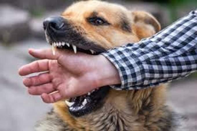 Nằm mơ bị chó cắn, chó đuổi là điềm gì tốt hay xấu, đánh con gì?