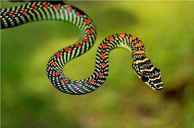 Giải mã giấc mơ thấy rắn - Nằm mơ thấy rắn đánh đề con gì?